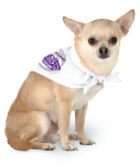 White Accessories: Doggie Bandana