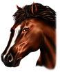 http://images.inksoft.com/images/userart/thumb/gallery261/Animals/MA_HORSE.png