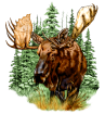 http://images.inksoft.com/images/userart/thumb/gallery261/Animals/WL_MOOSE.png