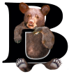 http://images.inksoft.com/images/userart/thumb/gallery511/Animal_Letters/Upper_Case_Letters/uc-b-bear.png